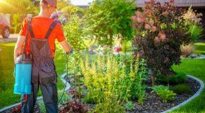 Notre enquête dans les jardineries